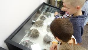 Клуб занимательной науки на экскурсии в музее природы